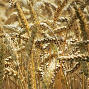 The Grain Debate - Pro-align